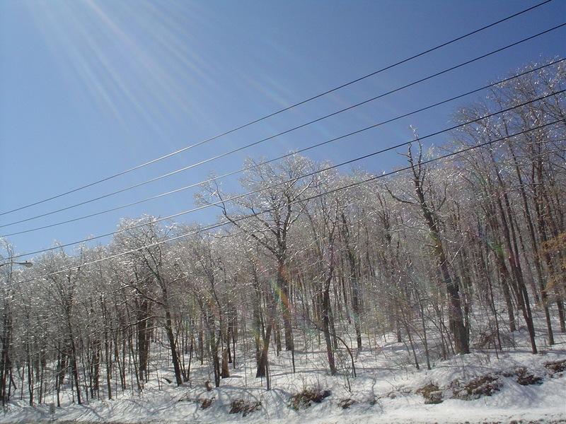 Icy_trees