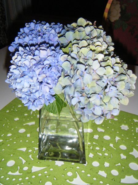 Dr flowers