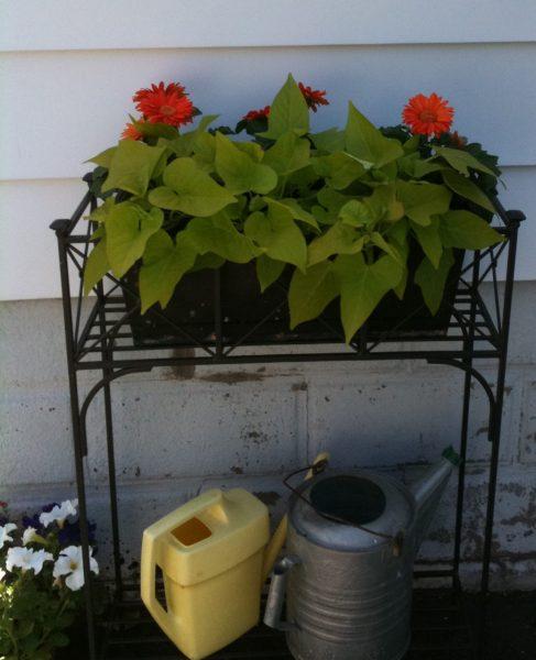 Back planter